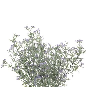 Mini Seeding Bush