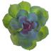 Echeveria Lola Succulent Pick