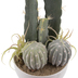Assorted Cacti In White Pot
