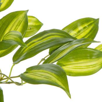 Vanilla Orchid Leaf Bush