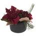 Poinsettia & Pine Arrangement
