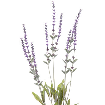 Dark Lavender Spray