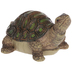 Turtle Looking Up