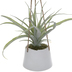 Succulent In White Flower Pot Hanging Decor