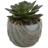 Succulent in Marbled Pot