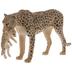 Cheetah With Cub