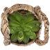 Succulent In Basket