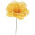 Light Yellow Peony Pick