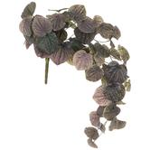 Peperomia Caperata Bush