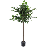 Ficus Tree Potted Floor Plant