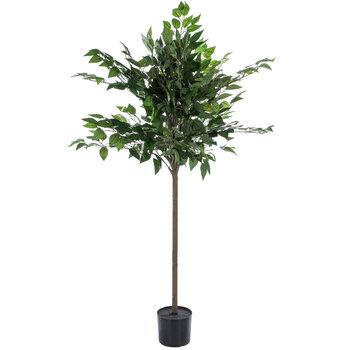 Ficus Tree Potted Floor Plant