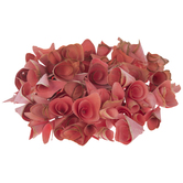 Pink Wood Rose Shavings
