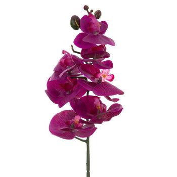 Purple True Touch Phalaenopsis Orchid Stem