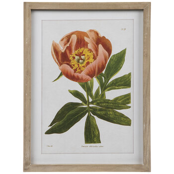 Flower Specimen Framed Wall Decor