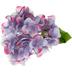 Lavender & Pink Hydrangea Pick