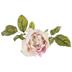 Blush Rose Stem
