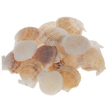 Pecten Tranquebaricus Shells