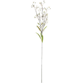 Gypsophila Stem