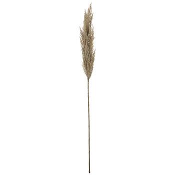 Beige Pampas Grass Stem