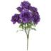 Dark Purple Rose Bush