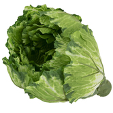 Green & White Cabbage