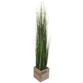 Onion Grass In Wood Box