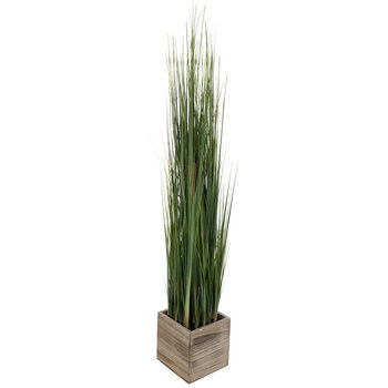 Onion Grass In Wood Box