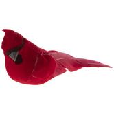 Red Cardinal Birds