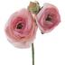 Pink Ranunculus Pick