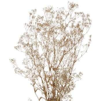 Gold Dried Flower Bundle