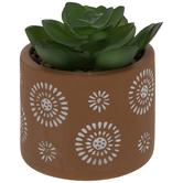Green Succulent In Burst Pot