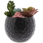 Succulents In Black Metal Pot