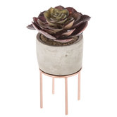 Sedum in Cement Pot with Copper Stand