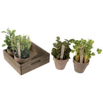 Potted Herbs In Wood Tray