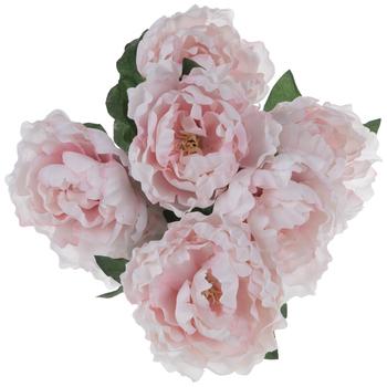 Light Pink Peony Bush