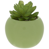 Succulent In Green Pot