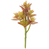 Graptosedium Succulent Pick