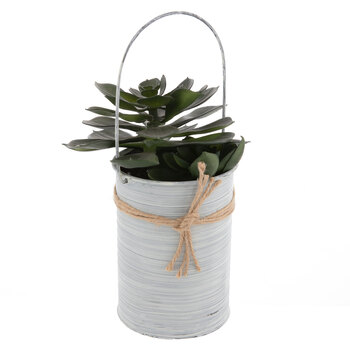 Succulent In White Metal Pot