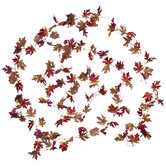 Burgundy & Brown Maple Leaf Garland