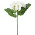 Cream Velvet Geranium Pick