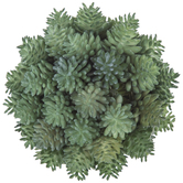 Green Succulent Decorative Sphere