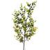 Eucalyptus Light Up Branch