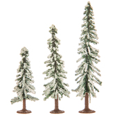 Snow Evergreen Trees