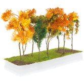 Fall Mixed Wood Edge Trees