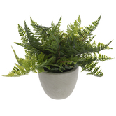 Ruffle Fern In Cement Pot