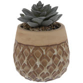 Succulent In Orange & Tan Diamond Pot
