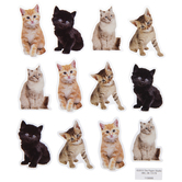 Realistic Kitten Stickers