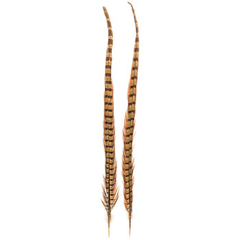 """Pheasant Tail Feathers - 20"""" - 22"""""""