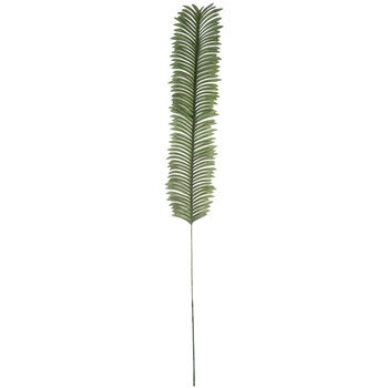 Green Cycas Fern Stem