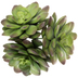 Green Echeveria Pick